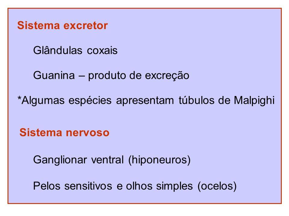 Sistema excretor Glândulas coxais Guanina – produto de excreção *Algumas espécies apresentam túbulos de Malpighi Sistema nervoso Ganglionar ventral (h