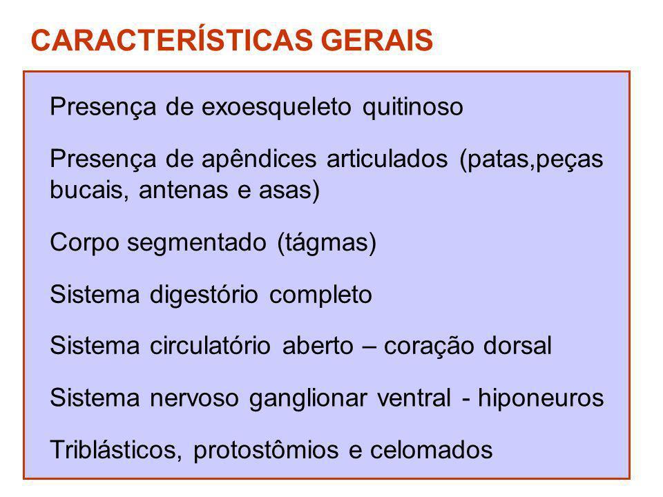 CARACTERÍSTICAS GERAIS Presença de exoesqueleto quitinoso Presença de apêndices articulados (patas,peças bucais, antenas e asas) Corpo segmentado (tág