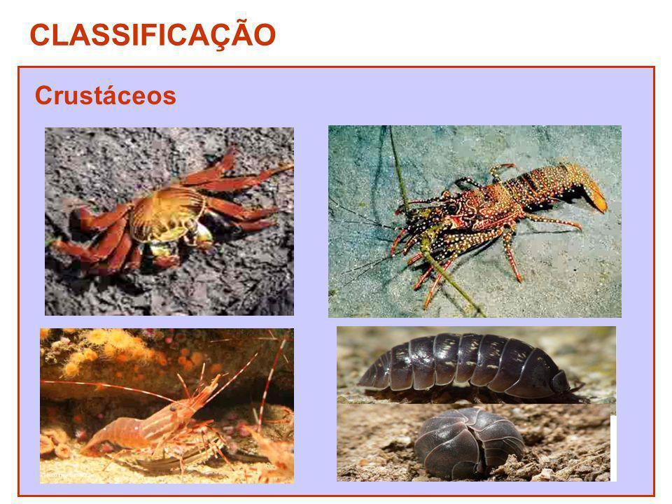 CLASSIFICAÇÃO Crustáceos