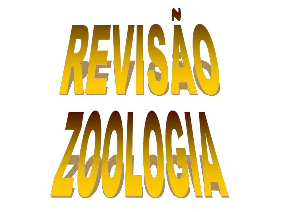 PORÍFEROS CNIDÁRIOS PLATELMINTES NEMATELMINTES ANELÍDEOS MOLUSCOS ARTRÓPODAS EQUINODERMAS CORDADOS DIBLÁSTICOS TRIBLÁSTICOS PROTOSTÔMIOS DEUTEROSTÔMIOS ACELOMADO PSEUDOCELOM CELOMADOS CLASSIFICAÇÃO GERAL