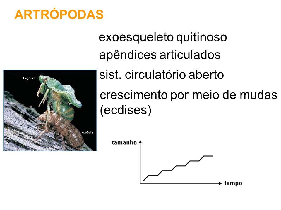 ARTRÓPODAS exoesqueleto quitinoso apêndices articulados crescimento por meio de mudas (ecdises) sist. circulatório aberto