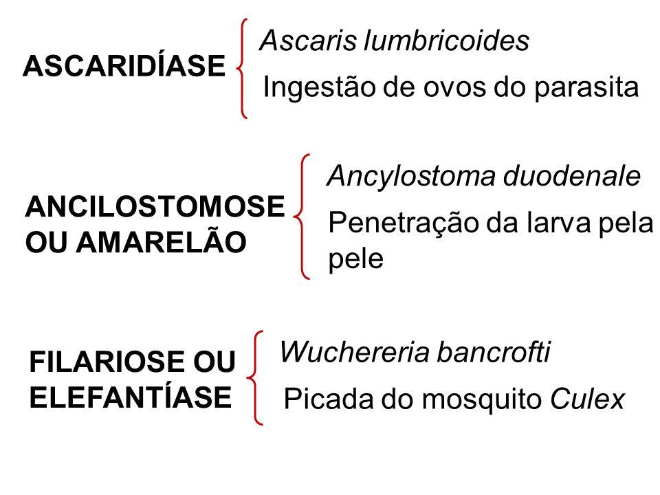 ASCARIDÍASE Ascaris lumbricoides Ingestão de ovos do parasita ANCILOSTOMOSE OU AMARELÃO Ancylostoma duodenale Penetração da larva pela pele FILARIOSE OU ELEFANTÍASE Wuchereria bancrofti Picada do mosquito Culex