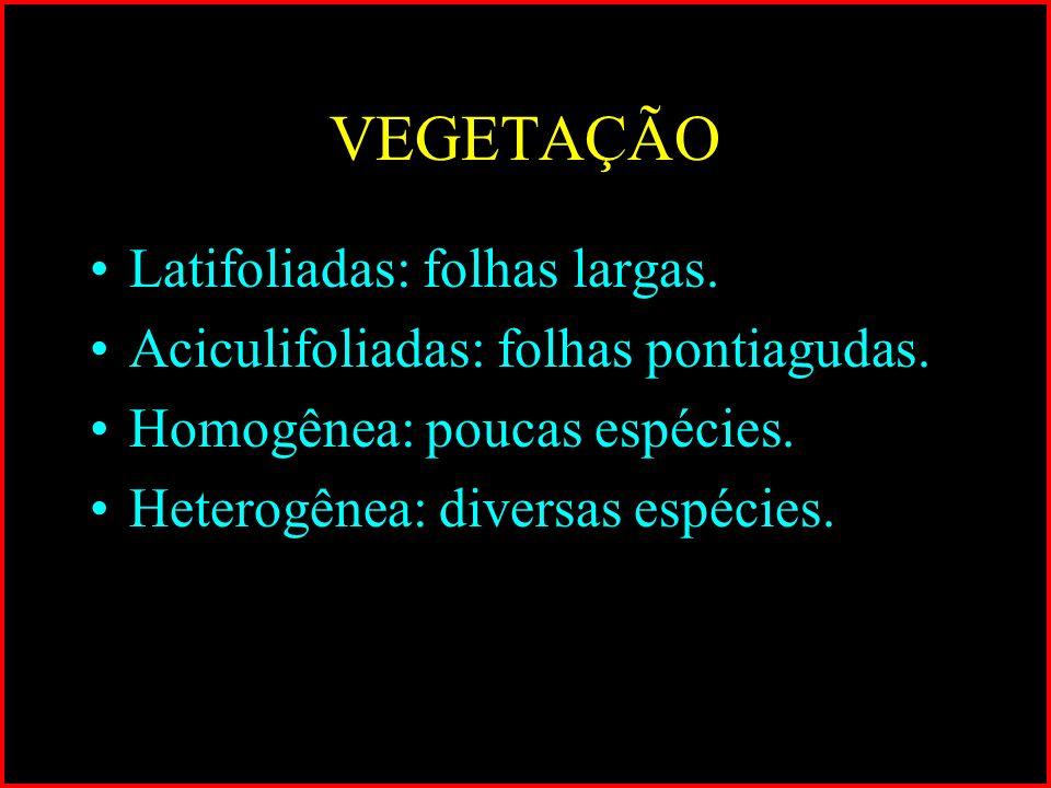 VEGETAÇÃO Latifoliadas: folhas largas. Aciculifoliadas: folhas pontiagudas. Homogênea: poucas espécies. Heterogênea: diversas espécies.