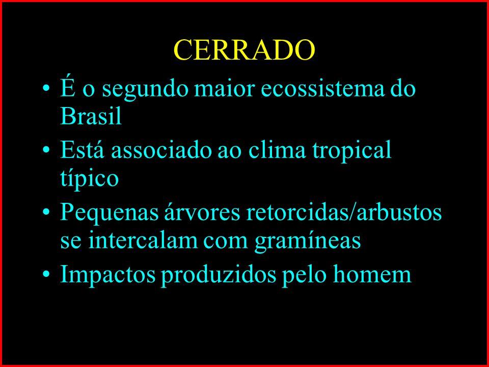 É o segundo maior ecossistema do Brasil Está associado ao clima tropical típico Pequenas árvores retorcidas/arbustos se intercalam com gramíneas Impac