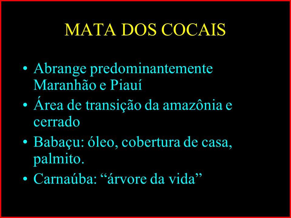 MATA DOS COCAIS Abrange predominantemente Maranhão e Piauí Área de transição da amazônia e cerrado Babaçu: óleo, cobertura de casa, palmito. Carnaúba: