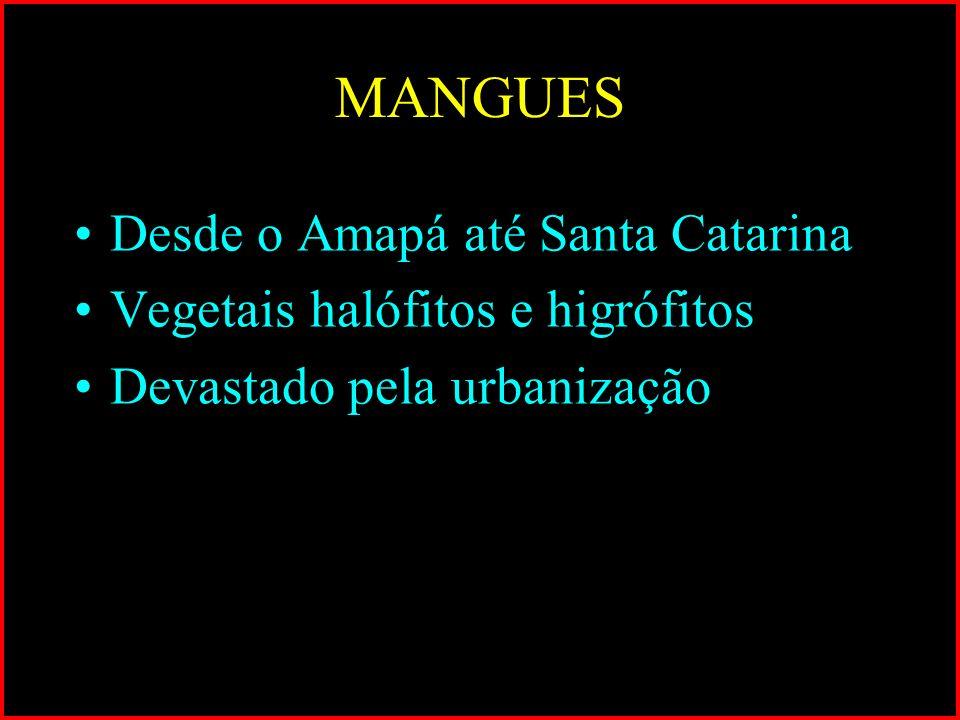 MANGUES Desde o Amapá até Santa Catarina Vegetais halófitos e higrófitos Devastado pela urbanização