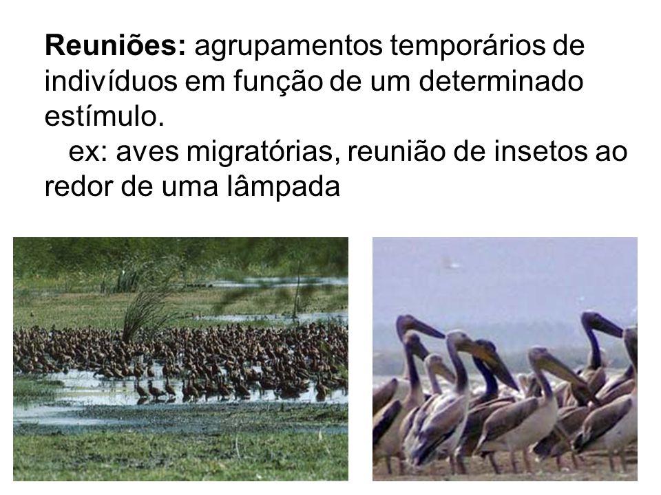 Reuniões: agrupamentos temporários de indivíduos em função de um determinado estímulo. ex: aves migratórias, reunião de insetos ao redor de uma lâmpad