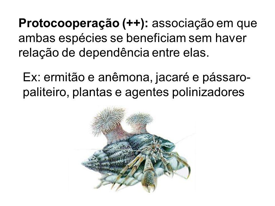 Protocooperação (++): associação em que ambas espécies se beneficiam sem haver relação de dependência entre elas. Ex: ermitão e anêmona, jacaré e páss
