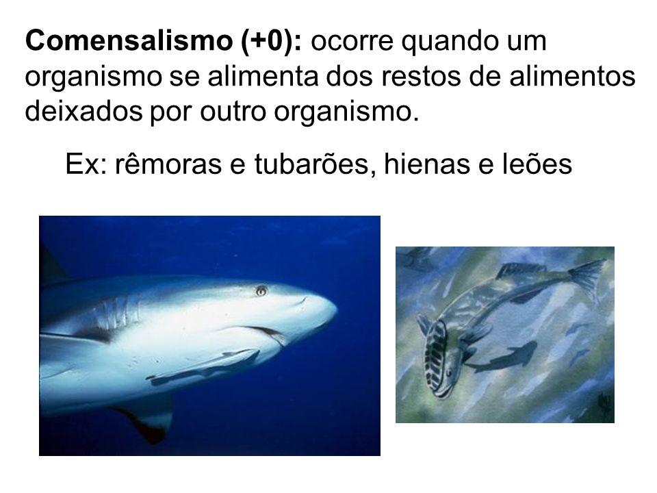 Comensalismo (+0): ocorre quando um organismo se alimenta dos restos de alimentos deixados por outro organismo. Ex: rêmoras e tubarões, hienas e leões