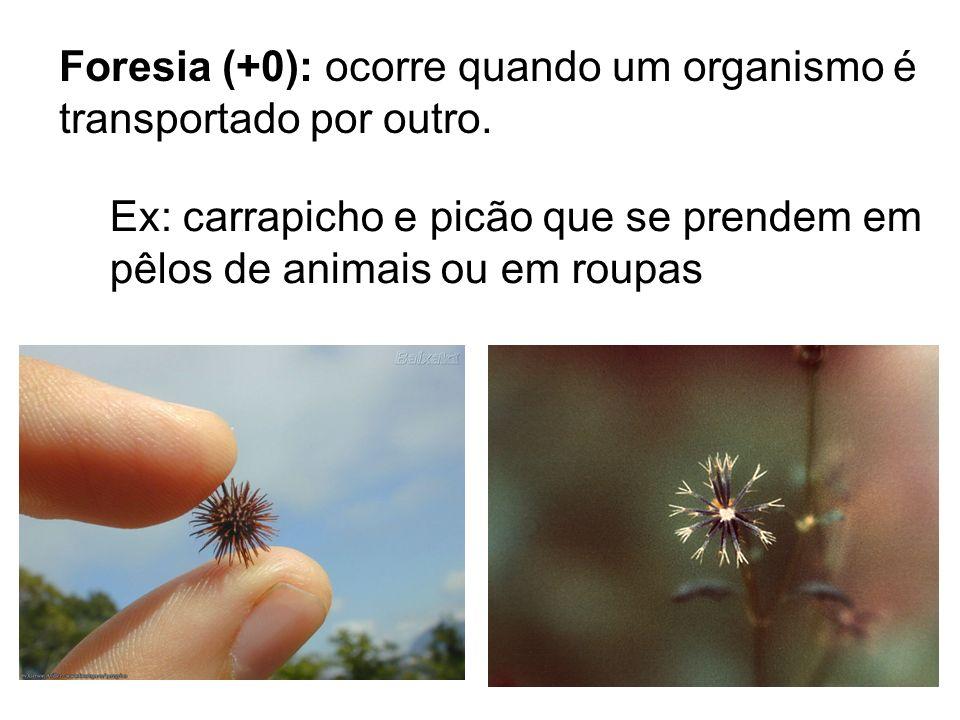 Foresia (+0): ocorre quando um organismo é transportado por outro. Ex: carrapicho e picão que se prendem em pêlos de animais ou em roupas
