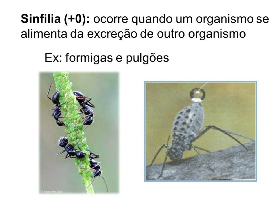 Sinfilia (+0): ocorre quando um organismo se alimenta da excreção de outro organismo Ex: formigas e pulgões