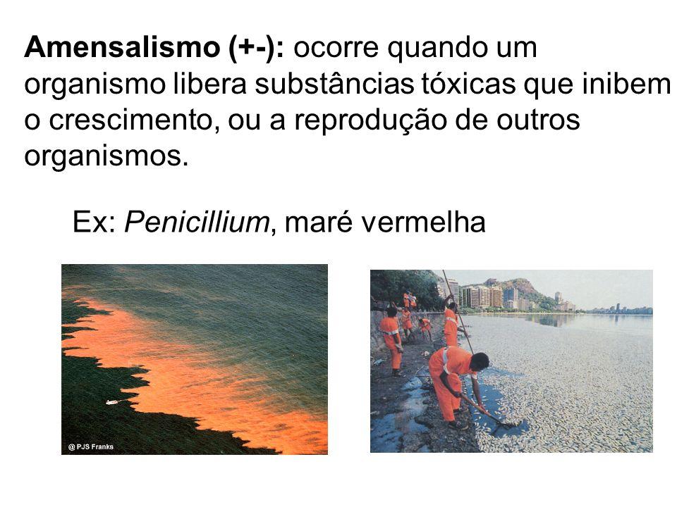 Amensalismo (+-): ocorre quando um organismo libera substâncias tóxicas que inibem o crescimento, ou a reprodução de outros organismos. Ex: Penicilliu