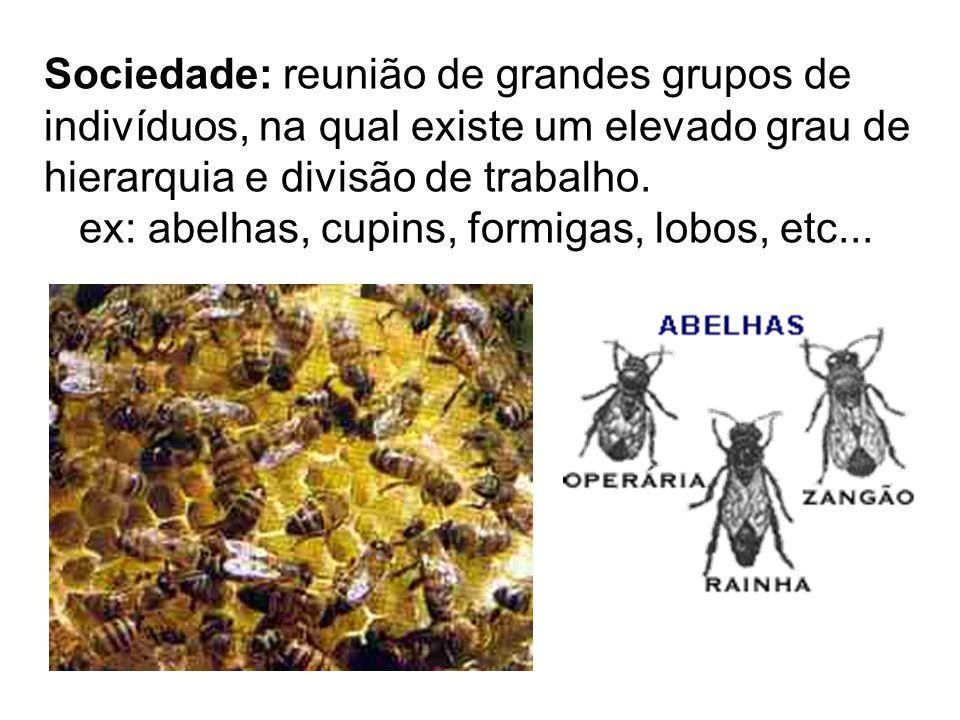 Sociedade: reunião de grandes grupos de indivíduos, na qual existe um elevado grau de hierarquia e divisão de trabalho. ex: abelhas, cupins, formigas,