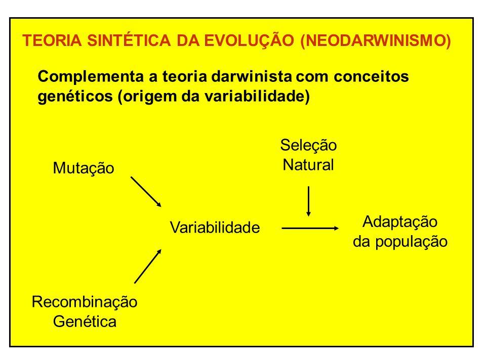 TEORIA SINTÉTICA DA EVOLUÇÃO (NEODARWINISMO) Complementa a teoria darwinista com conceitos genéticos (origem da variabilidade) Mutação Recombinação Genética Adaptação da população Seleção Natural Variabilidade