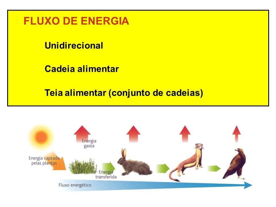 FLUXO DE ENERGIA Unidirecional Teia alimentar (conjunto de cadeias) Cadeia alimentar