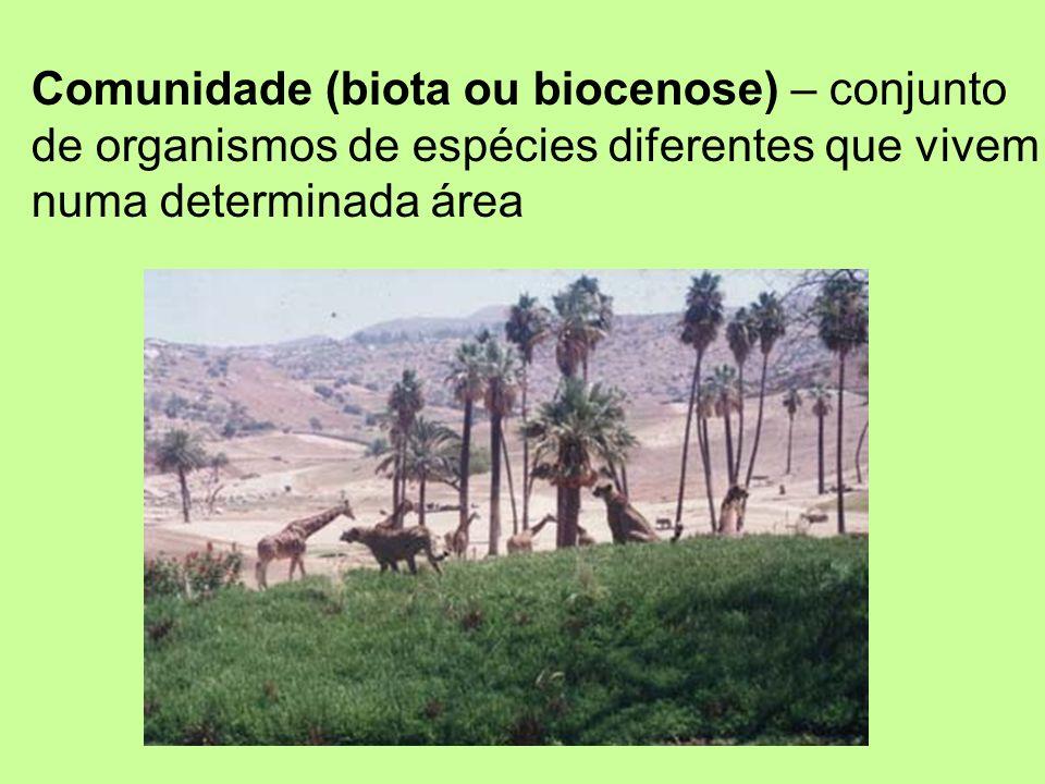 Comunidade (biota ou biocenose) – conjunto de organismos de espécies diferentes que vivem numa determinada área