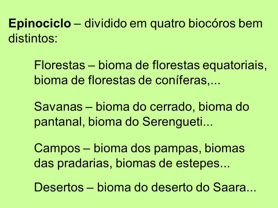 Epinociclo – dividido em quatro biocóros bem distintos: Florestas – bioma de florestas equatoriais, bioma de florestas de coníferas,... Savanas – biom