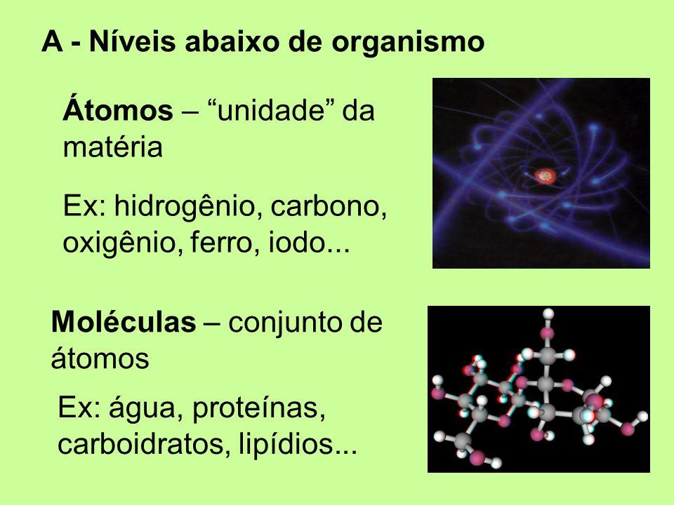 A - Níveis abaixo de organismo Átomos – unidade da matéria Ex: hidrogênio, carbono, oxigênio, ferro, iodo... Moléculas – conjunto de átomos Ex: água,