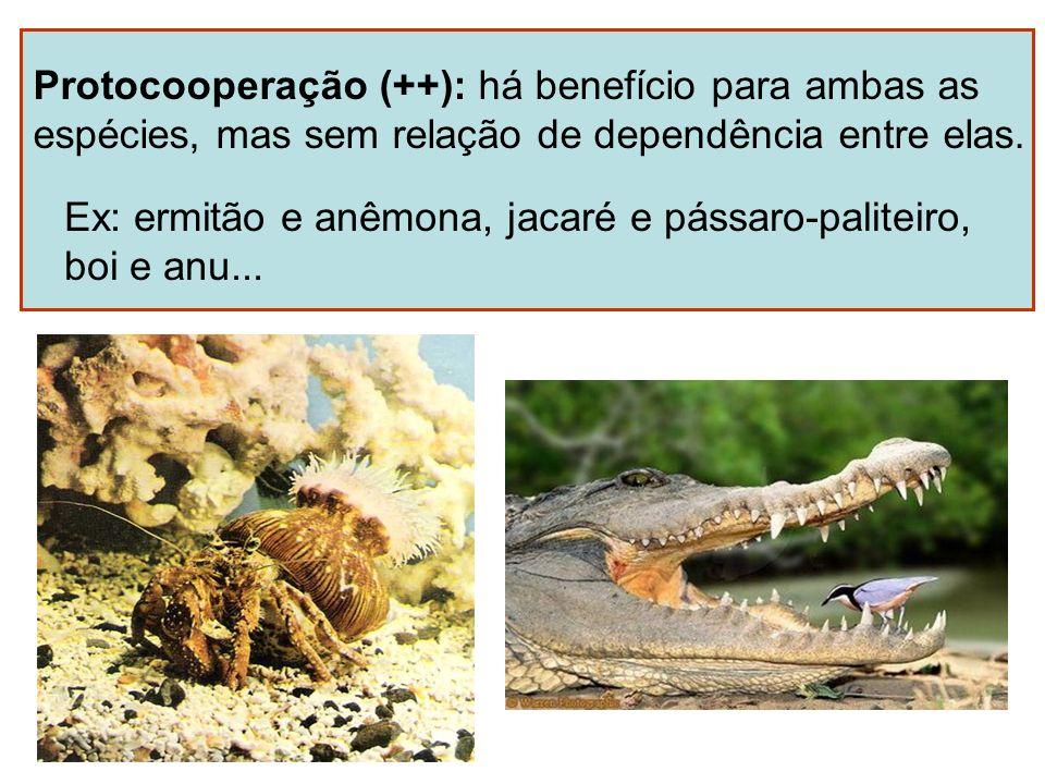 Protocooperação (++): há benefício para ambas as espécies, mas sem relação de dependência entre elas. Ex: ermitão e anêmona, jacaré e pássaro-paliteir
