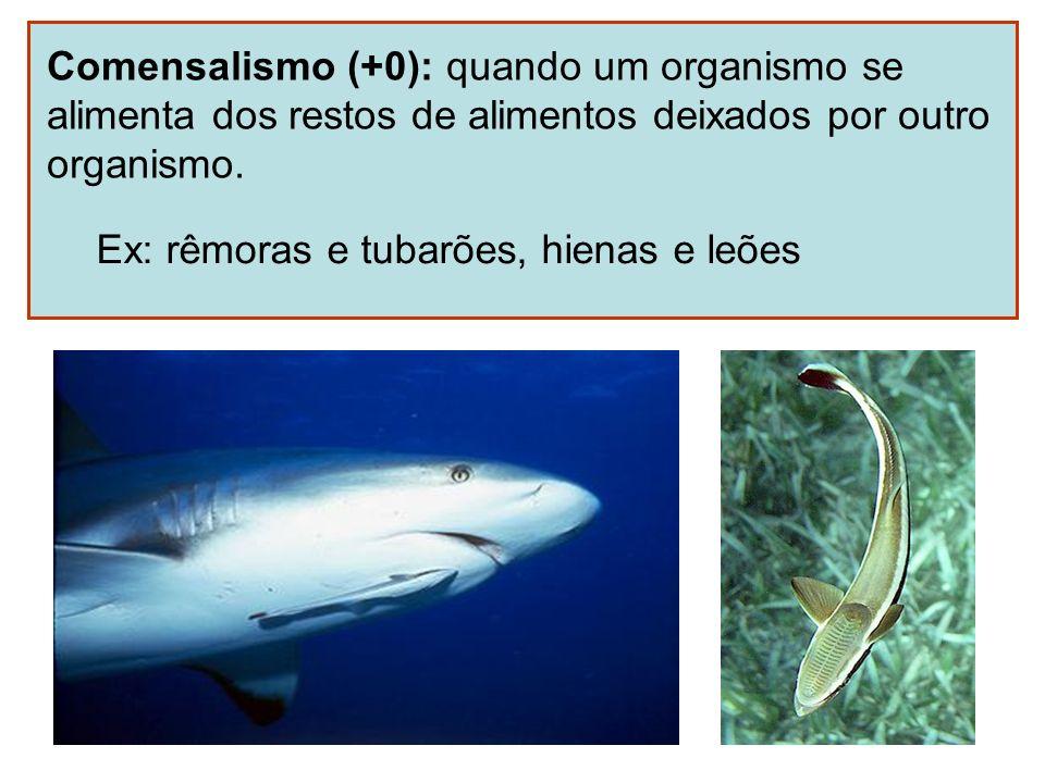 Comensalismo (+0): quando um organismo se alimenta dos restos de alimentos deixados por outro organismo. Ex: rêmoras e tubarões, hienas e leões