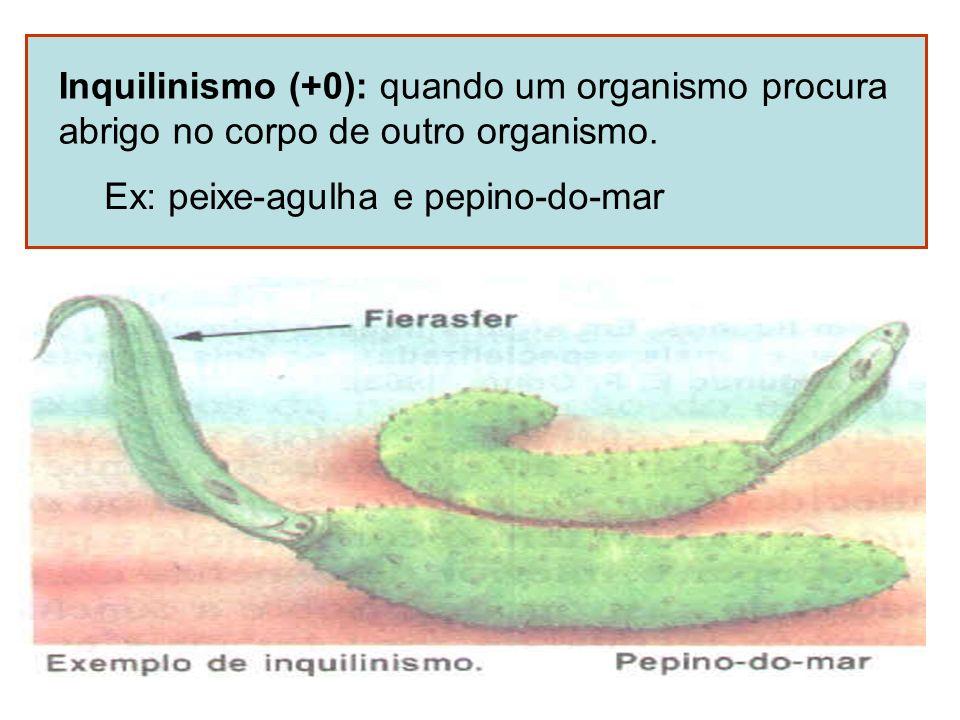 Inquilinismo (+0): quando um organismo procura abrigo no corpo de outro organismo. Ex: peixe-agulha e pepino-do-mar