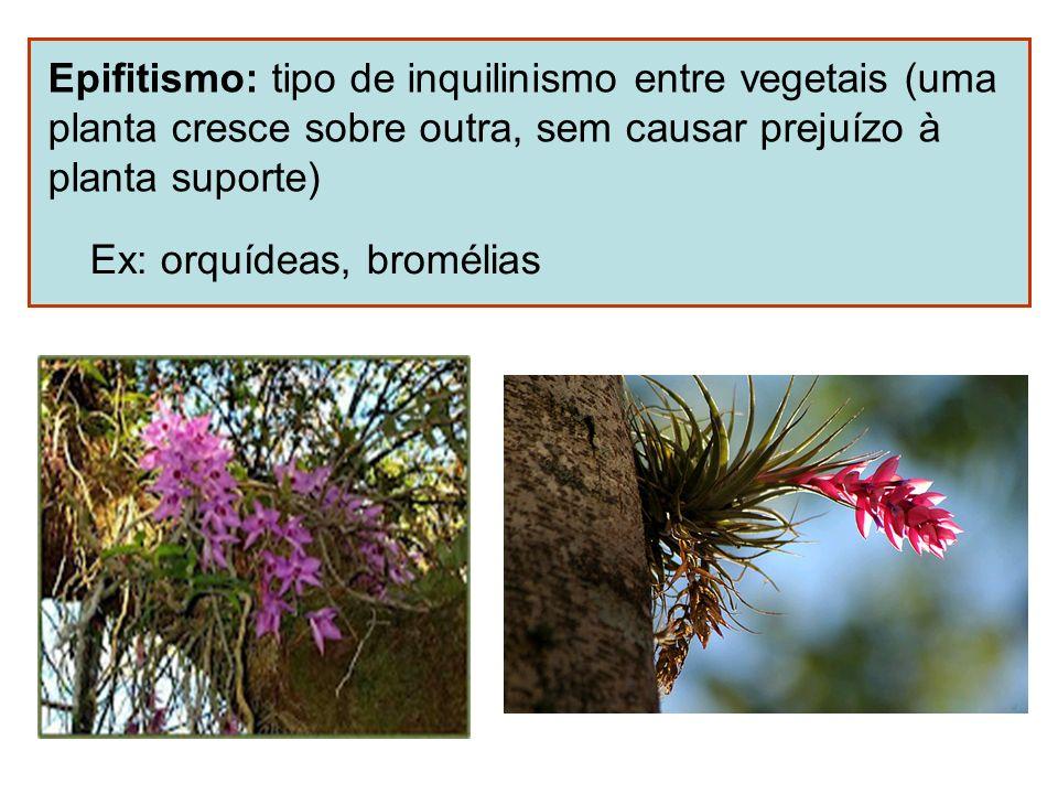 Epifitismo: tipo de inquilinismo entre vegetais (uma planta cresce sobre outra, sem causar prejuízo à planta suporte) Ex: orquídeas, bromélias