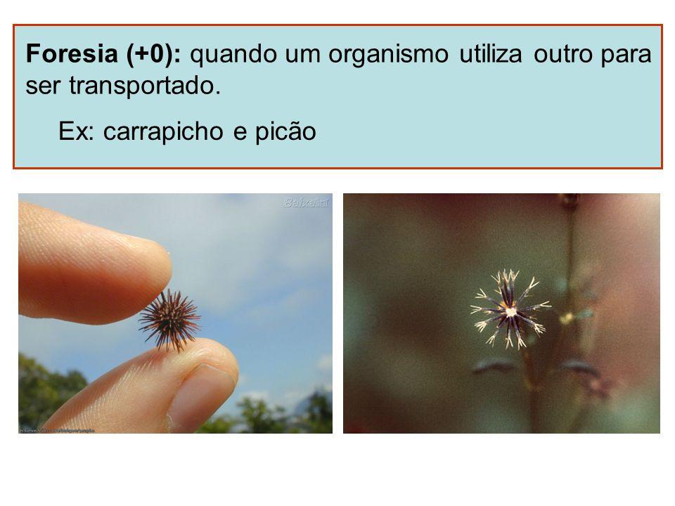 Foresia (+0): quando um organismo utiliza outro para ser transportado. Ex: carrapicho e picão
