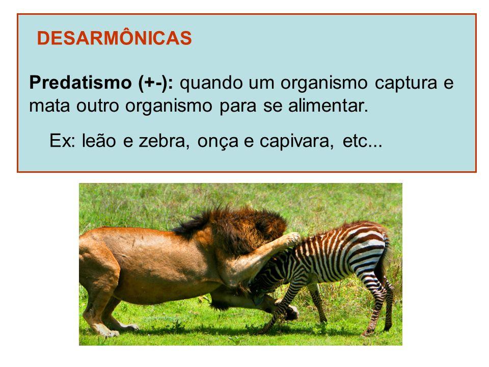 DESARMÔNICAS Predatismo (+-): quando um organismo captura e mata outro organismo para se alimentar. Ex: leão e zebra, onça e capivara, etc...