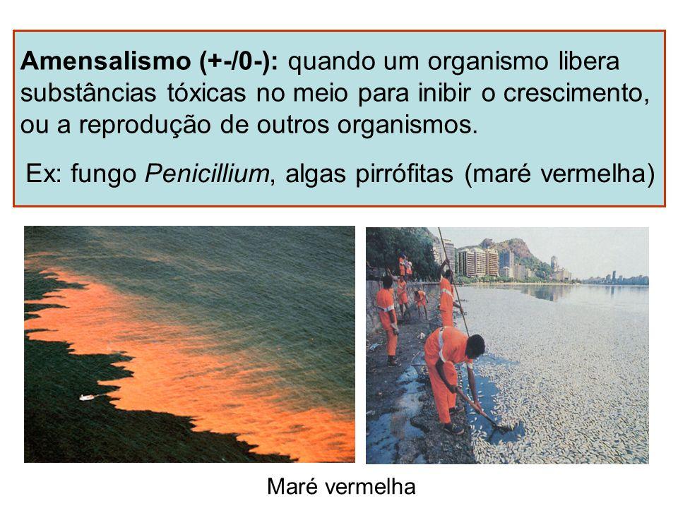 Amensalismo (+-/0-): quando um organismo libera substâncias tóxicas no meio para inibir o crescimento, ou a reprodução de outros organismos. Ex: fungo