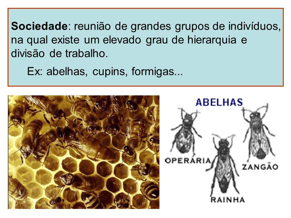 Sociedade: reunião de grandes grupos de indivíduos, na qual existe um elevado grau de hierarquia e divisão de trabalho. Ex: abelhas, cupins, formigas.