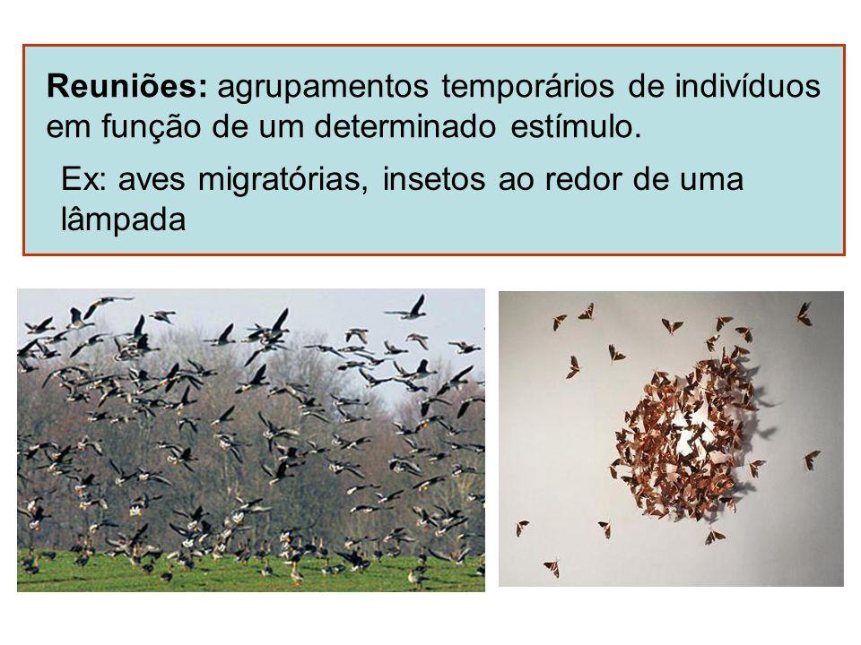 Reuniões: agrupamentos temporários de indivíduos em função de um determinado estímulo. Ex: aves migratórias, insetos ao redor de uma lâmpada