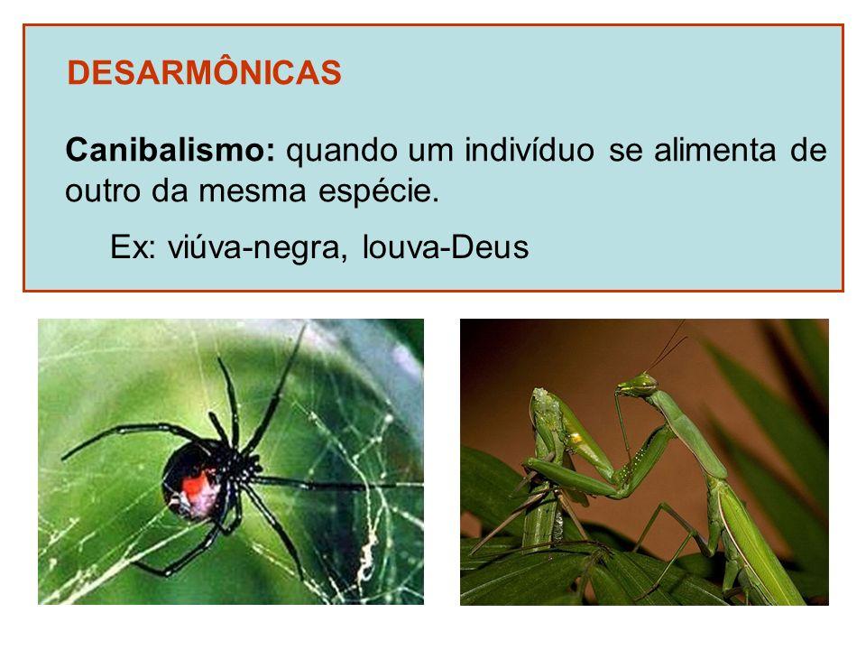 DESARMÔNICAS Canibalismo: quando um indivíduo se alimenta de outro da mesma espécie. Ex: viúva-negra, louva-Deus