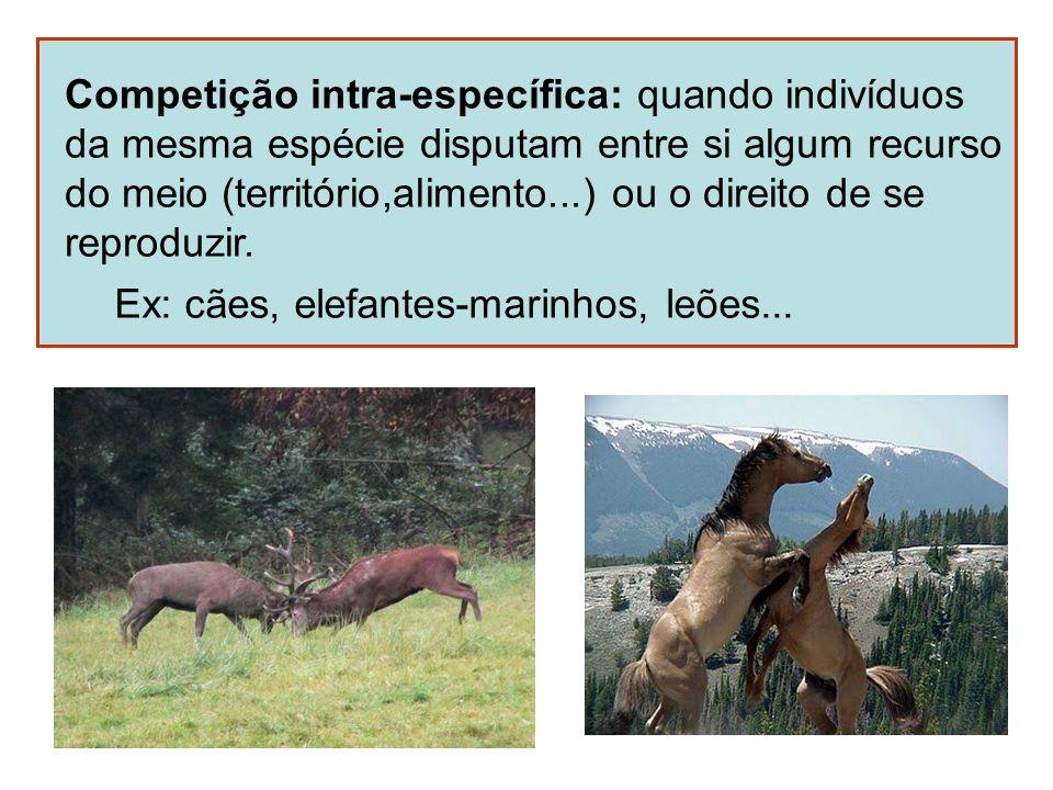 Competição intra-específica: quando indivíduos da mesma espécie disputam entre si algum recurso do meio (território,alimento...) ou o direito de se re