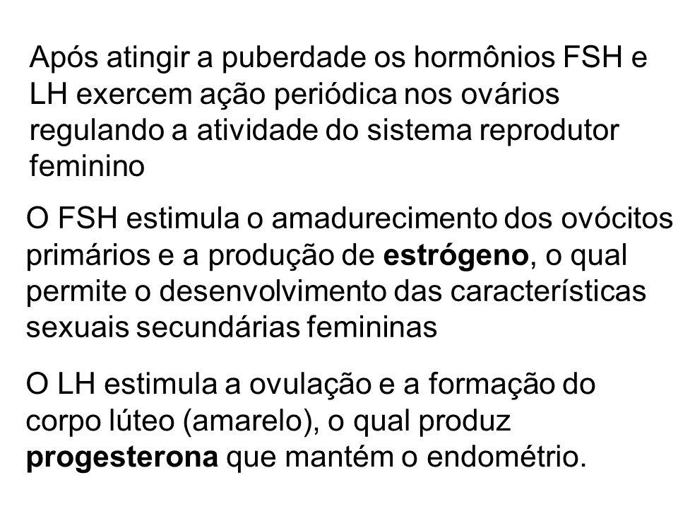 Após atingir a puberdade os hormônios FSH e LH exercem ação periódica nos ovários regulando a atividade do sistema reprodutor feminino O FSH estimula
