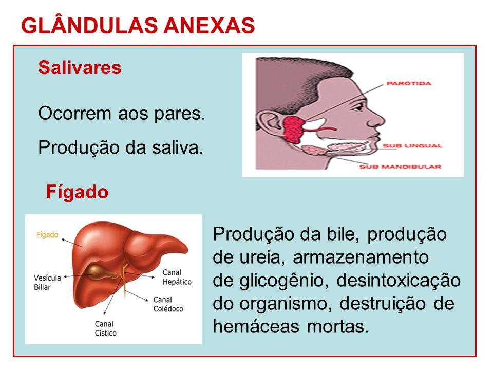 Pâncreas Glândula anfícrina ou mista.Função exócrina – produção do suco pancreático.