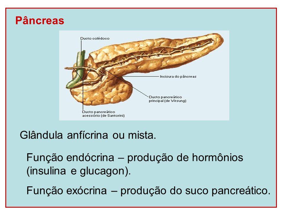 Secreções do Sistema Digestório Saliva Umedificação dos alimentos.