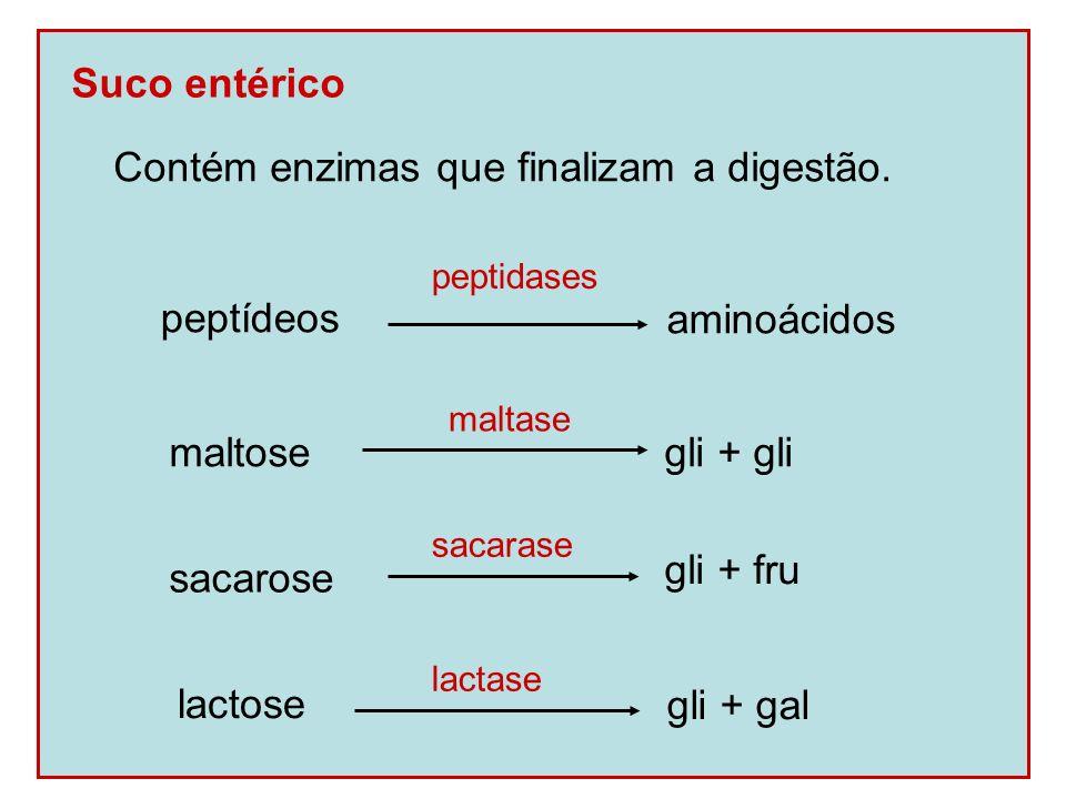 Controle hormonal da digestão Gastrina: produzida pelo estômago, estimula a secreção do suco gástrico.