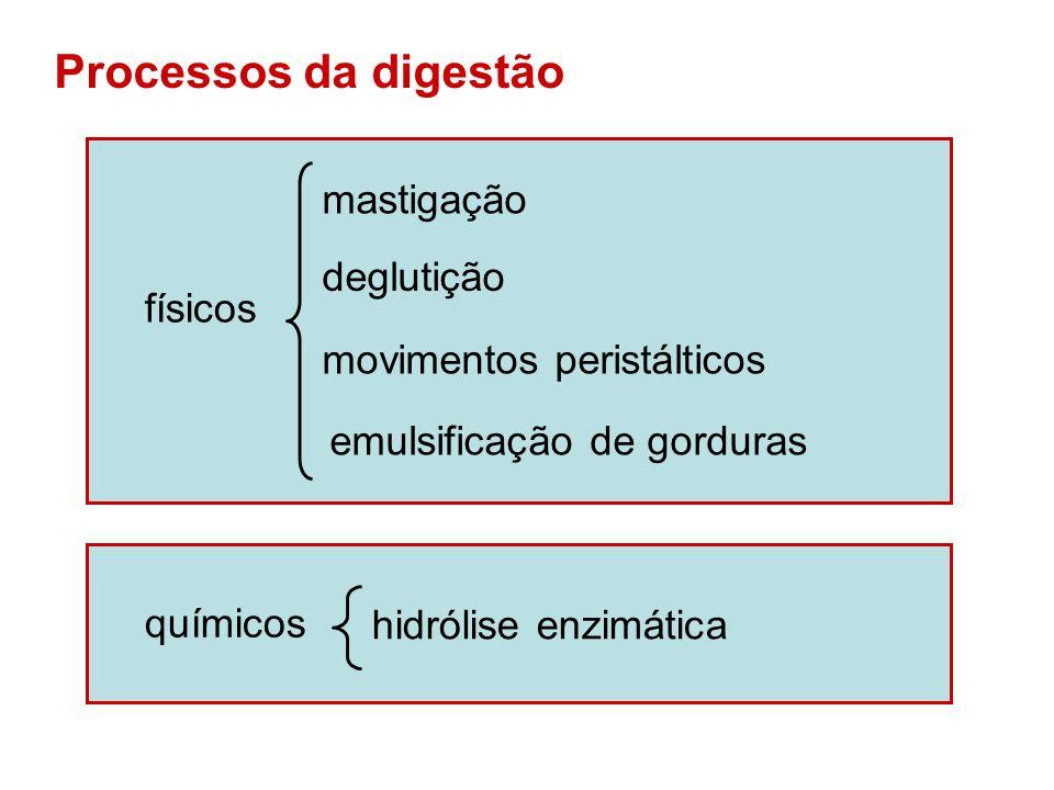 Tipos de digestão Intracelular : ocorre no interior da célula (formação de vacúolos digestivos).