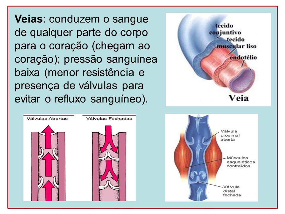 Veias: conduzem o sangue de qualquer parte do corpo para o coração (chegam ao coração); pressão sanguínea baixa (menor resistência e presença de válvu
