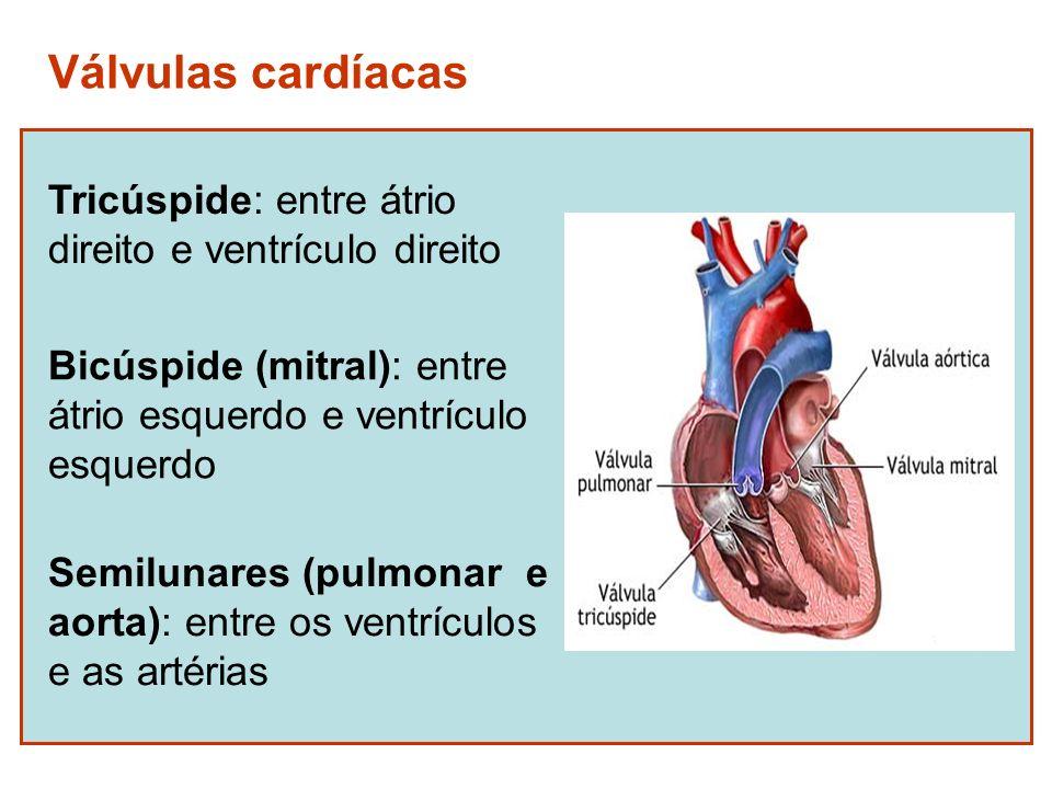 Válvulas cardíacas Tricúspide: entre átrio direito e ventrículo direito Bicúspide (mitral): entre átrio esquerdo e ventrículo esquerdo Semilunares (pu