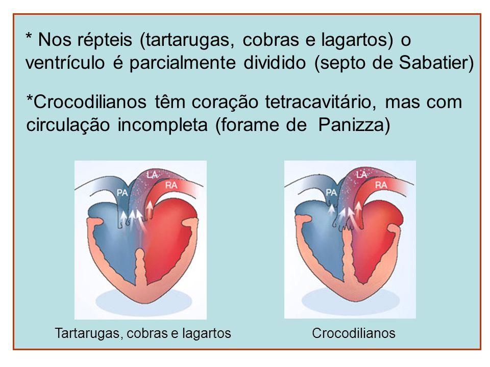 * Nos répteis (tartarugas, cobras e lagartos) o ventrículo é parcialmente dividido (septo de Sabatier) Tartarugas, cobras e lagartos *Crocodilianos tê
