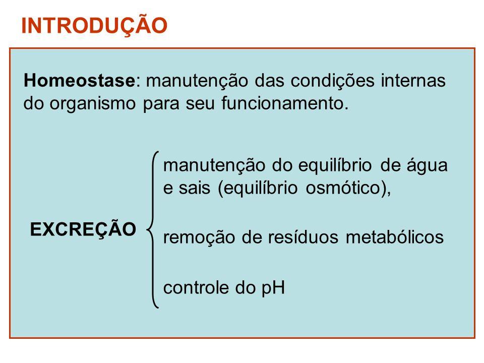 Amônia custo energético de produção tóxico quantidade de H 2 O para diluição (amoniotélicos) Resíduos nitrogenados Ác.