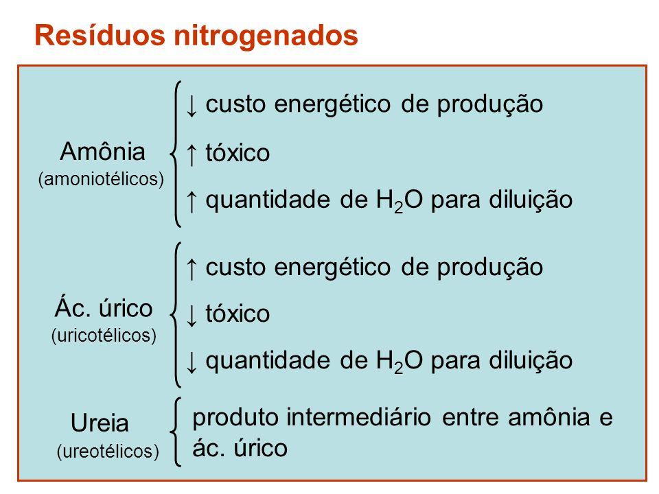 Animais amoniotélicos
