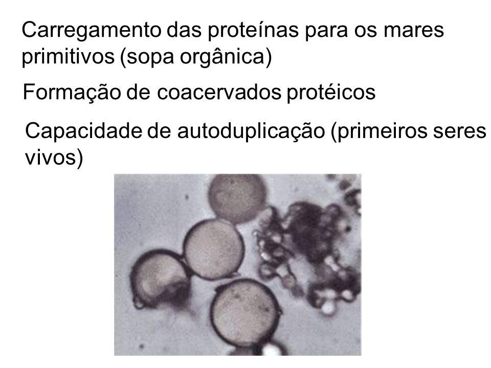 Carregamento das proteínas para os mares primitivos (sopa orgânica) Formação de coacervados protéicos Capacidade de autoduplicação (primeiros seres vi