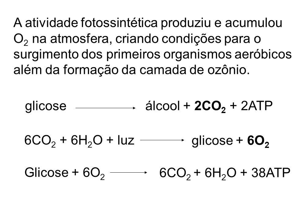A atividade fotossintética produziu e acumulou O 2 na atmosfera, criando condições para o surgimento dos primeiros organismos aeróbicos além da formaç