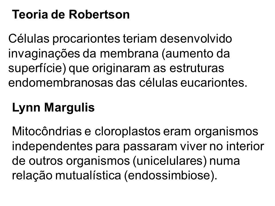 Teoria de Robertson Células procariontes teriam desenvolvido invaginações da membrana (aumento da superfície) que originaram as estruturas endomembran