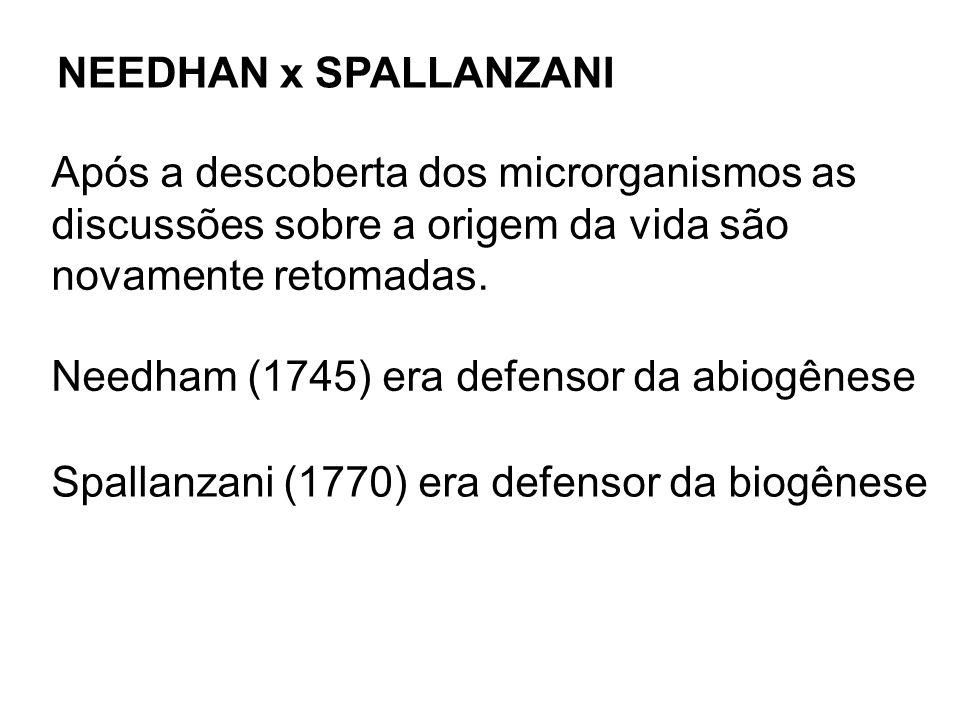 NEEDHAN x SPALLANZANI Após a descoberta dos microrganismos as discussões sobre a origem da vida são novamente retomadas. Needham (1745) era defensor d