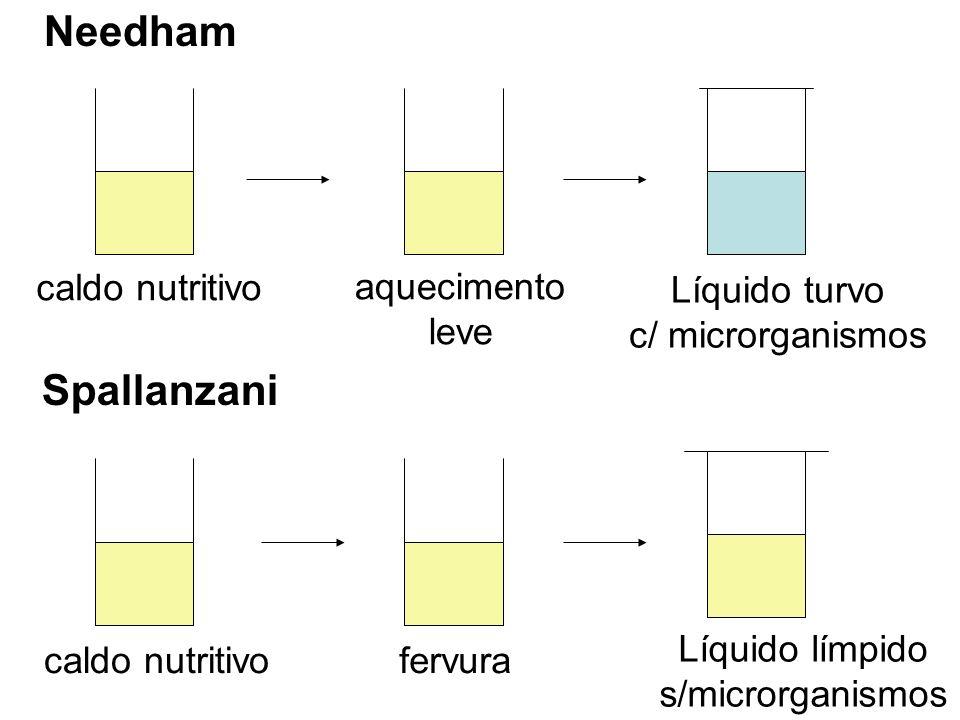 Needham caldo nutritivo aquecimento leve Líquido turvo c/ microrganismos caldo nutritivofervura Líquido límpido s/microrganismos Spallanzani