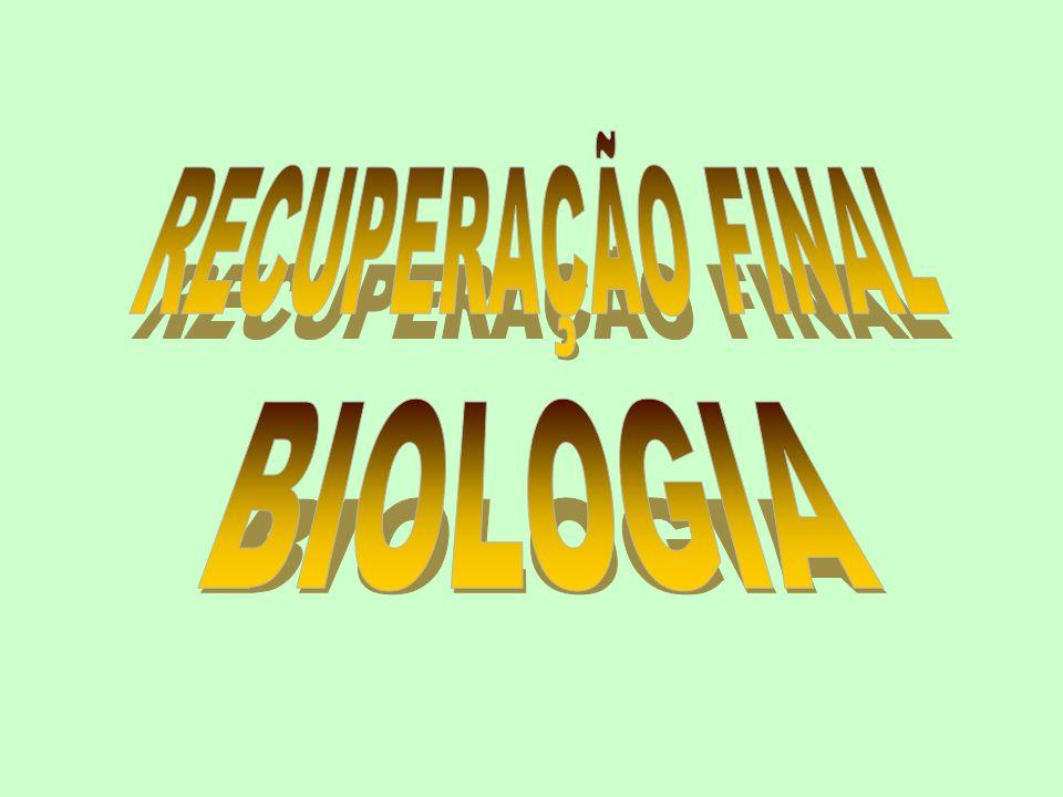 CORDADOS CARACTERÍSTICAS EXCLUSIVAS Notocorda Fendas branquiais ou faríngeas Tubo nervoso dorsal Cauda pós anal * Presentes pelo menos na fase embrionária