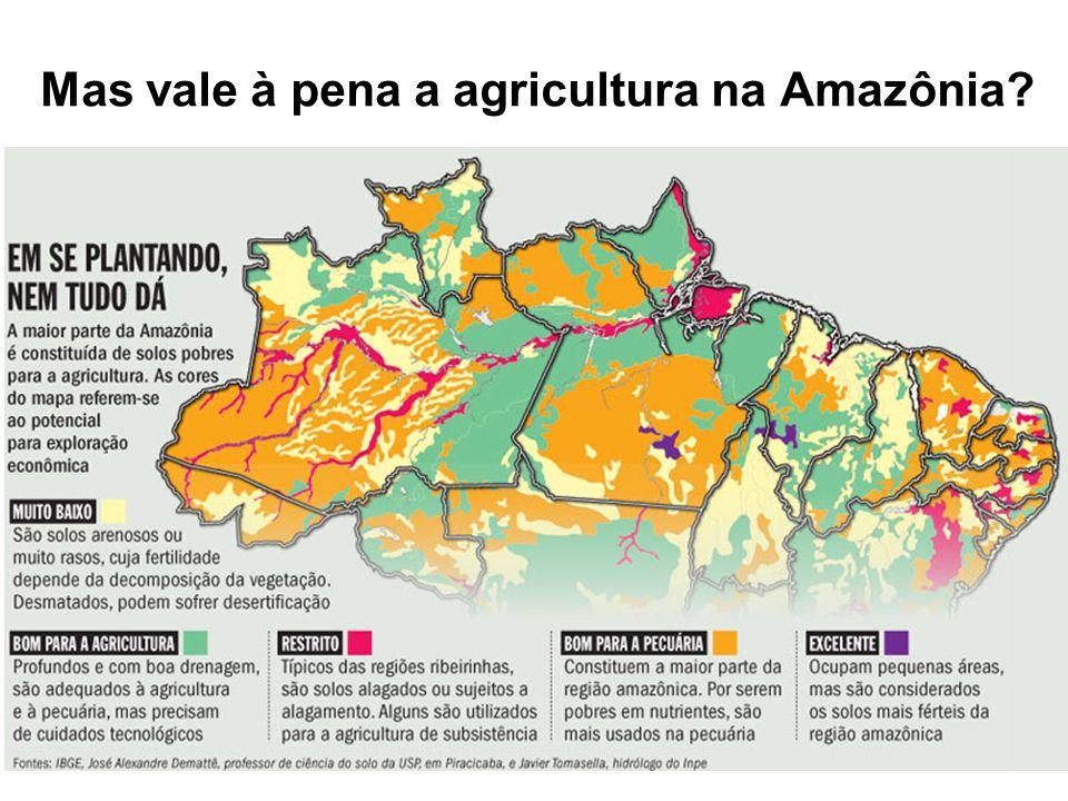 Mas vale à pena a agricultura na Amazônia?